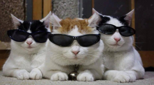 Top-10-Images-of-Three-Cats-Together-8